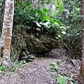 瓦拉米步道上遇妙蛙種子?