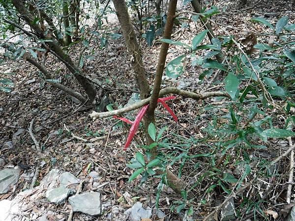 沿途有紅色塑膠綁條