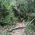 地標二:迎賓倒木