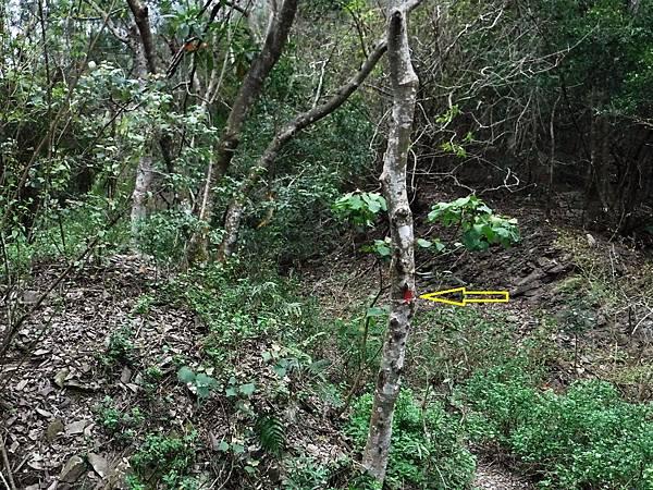 樹幹上漆紅點作路標指示