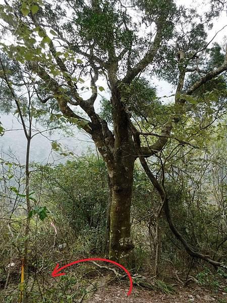 路標五:大樹