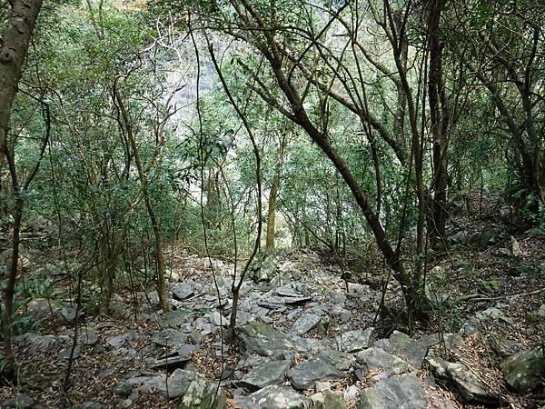 樹林中下切河谷路線