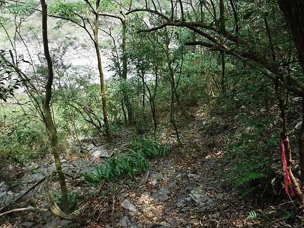 樹林間看見河床
