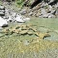 瀑布水潭有水草地毯飄浮