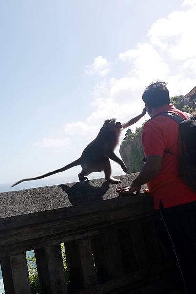猴子搶走觀光客眼鏡