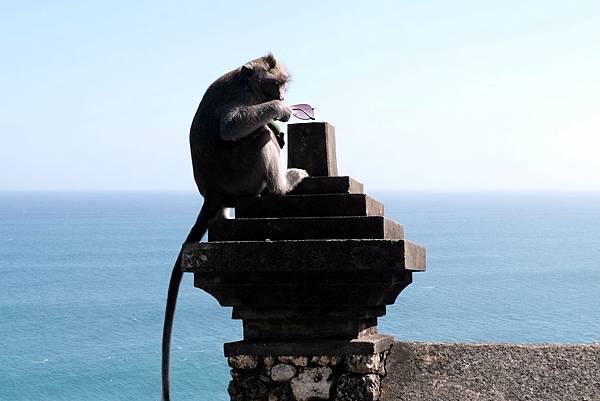 烏魯瓦圖神廟猴子