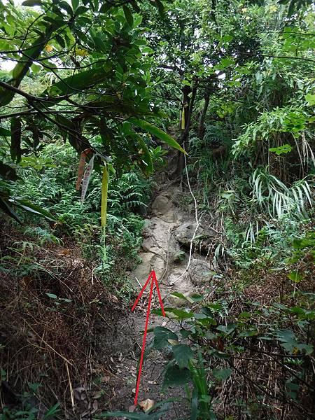 登山綁條往稜線方向