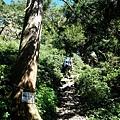 密林中的第二段陡上