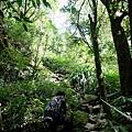 密林中的第三段陡上