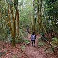 密林中的一路陡下