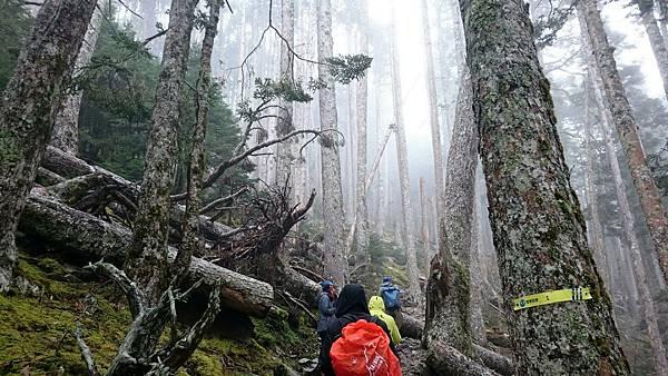 進入雪山黑森林