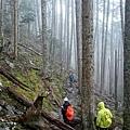 走入黑森林步道