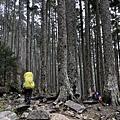 黑森林步道一景