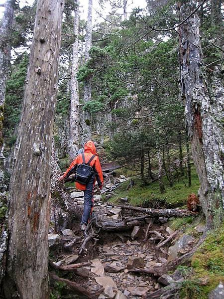黑森林中繼續陡上