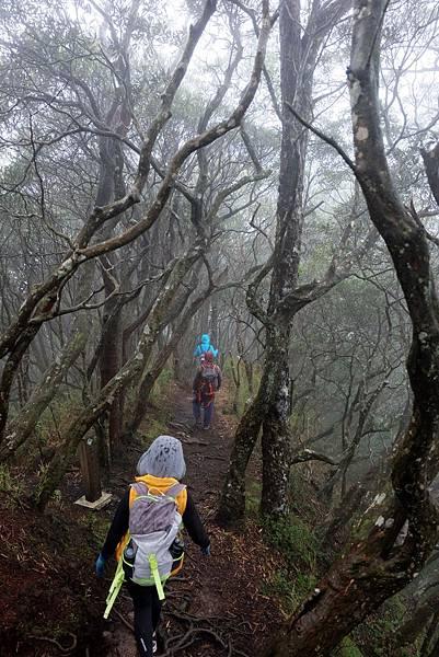 山徑步道開始緩下
