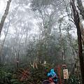 遇岔路往左內鳥嘴山、取右北得拉曼巨木