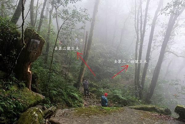 前往第二、三、四號巨木岔路