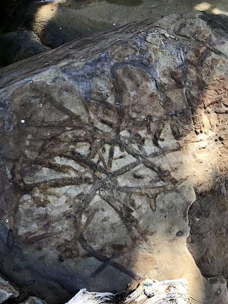 發現類似植物生成紋化石
