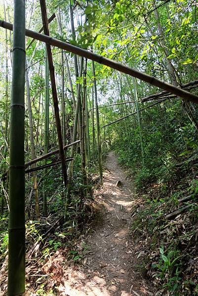 進入竹林小徑
