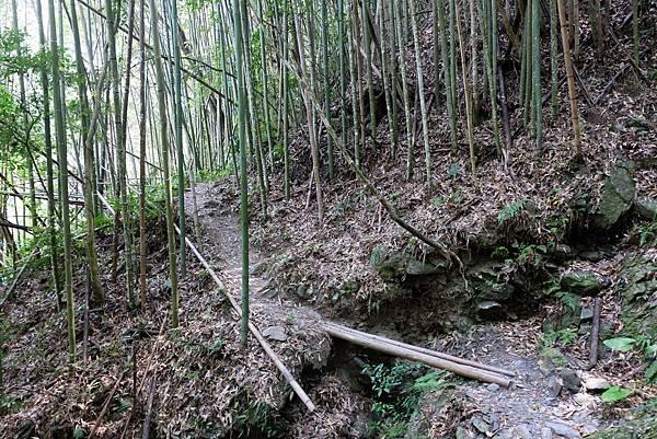 竹林小徑一景
