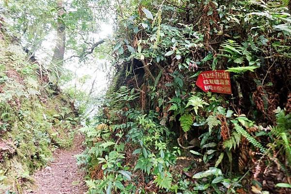 稜線隘口(1.4K,約H1460m)