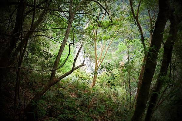 密林中的展望
