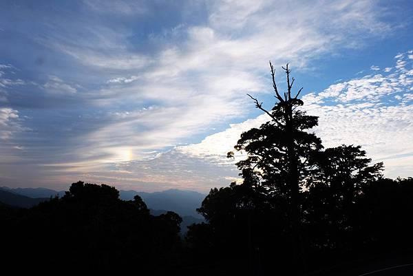 碧綠神木停車場清晨天空