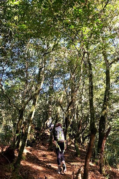 羊頭山登山步道陽光灑落林間