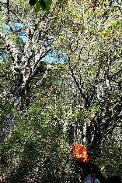 針闊葉混合林林相