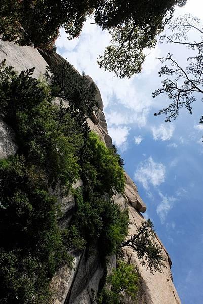 全真崖仰望華山南峰絕壁