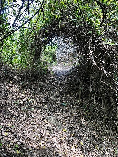 穿越樹叢藤蔓