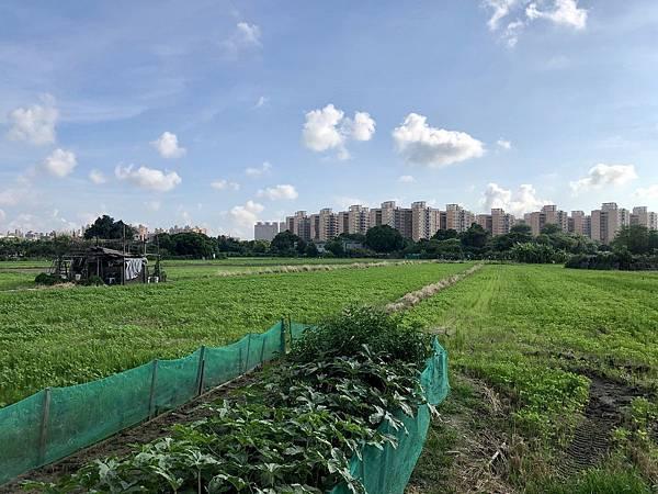 大圈的東邊區域已成農田和荒地