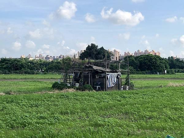 東邊農田中的副塔拉線座墩遺跡