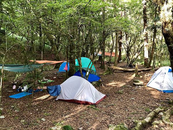 松林營地一景