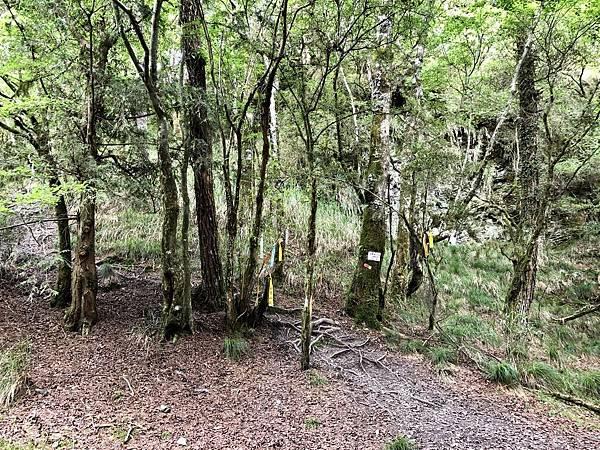 松林營地往新路方向