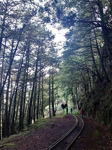 眠月線森林鐵道風景