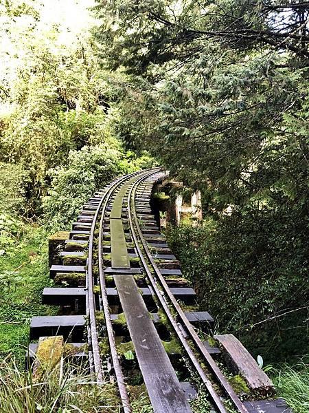 第19號橋樑最美森林鐵路彎道風景