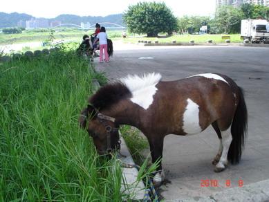 可愛迷你馬