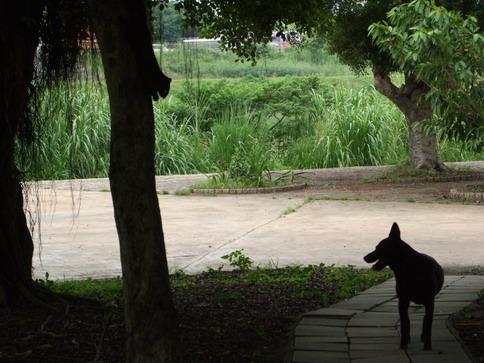 當碰上黑狗時...松鼠上樹啦