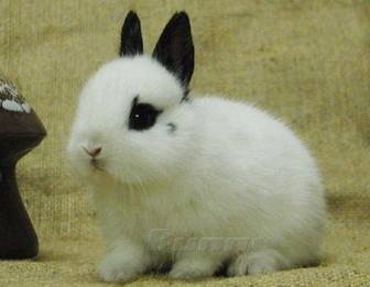 兔子-02.jpg