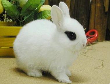 兔子-01.jpg