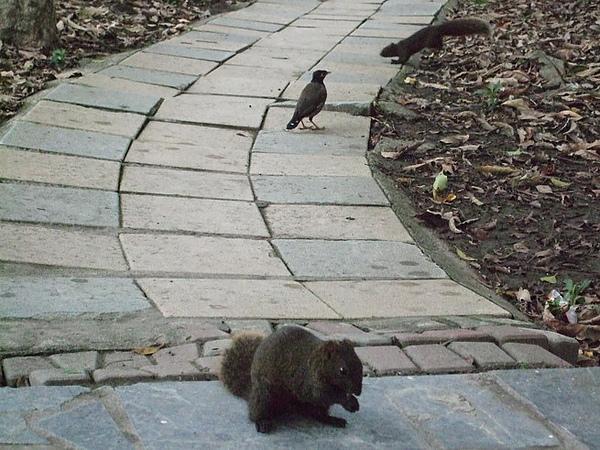松鼠與鳥兒