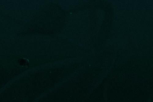 大章魚.jpg