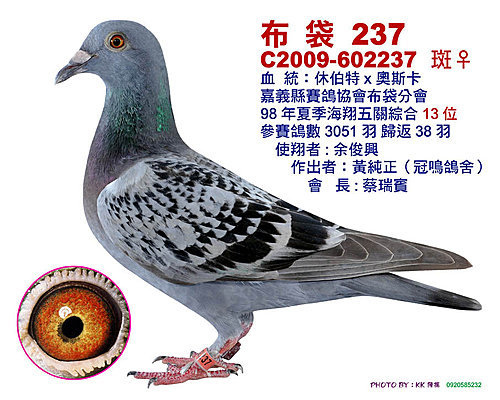 南海入賞鴿
