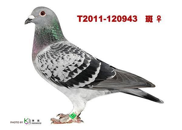 T.2011-120943 斑母