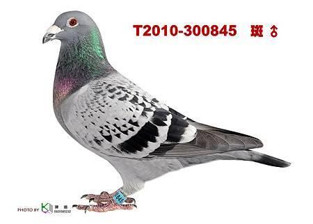 T.2010-300845 斑公