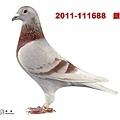 """銀礦1688"""""""