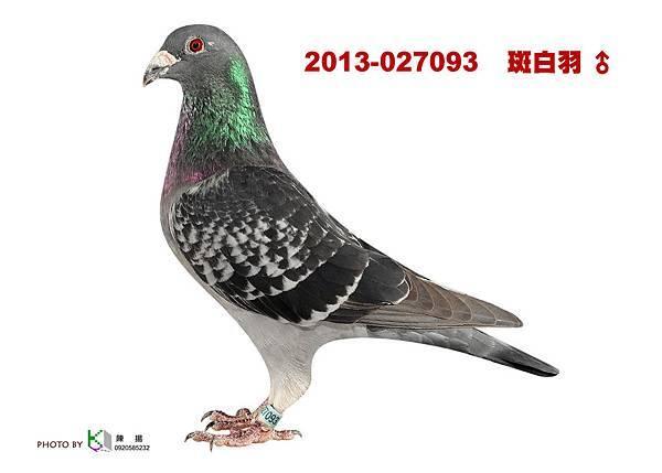 2013-027093 斑白羽公
