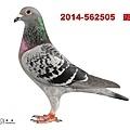 2014-562505    斑母