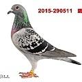 2015-290511    斑母